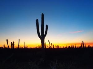 desierto de vincainzo