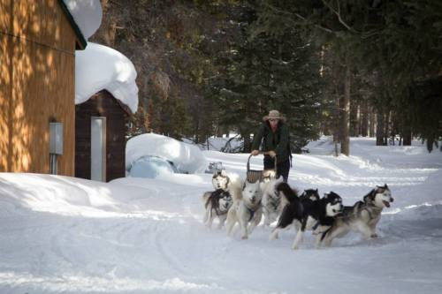 Jack the dogsled guide!